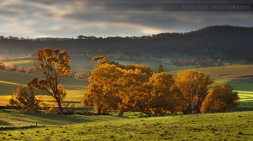 The Autumn Grove || RURAL NSW || CENTRAL TABLELANDS