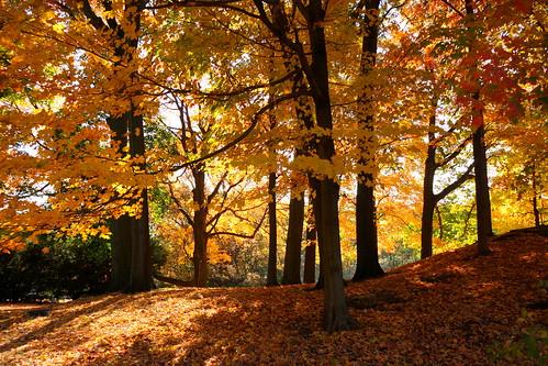 autumn trees nature landscape massachusetts newengland autumncolors waltham autumntrees walthamma lymanestate treesdiestandingup