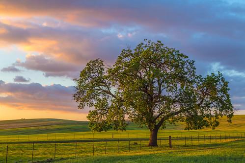 sunset rural day cloudy sanbenitocounty santaanavalleyroad canon5dmarkiii