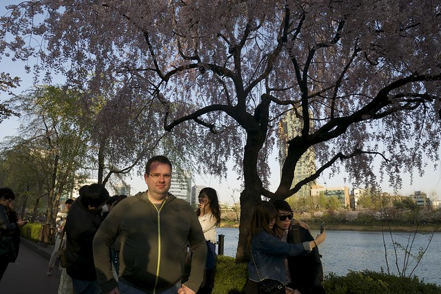 Me and the Cherry Blossoms