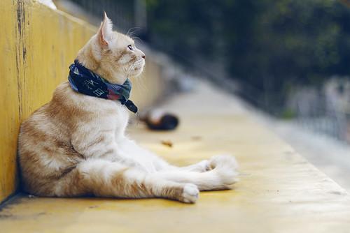 CAT-夏至
