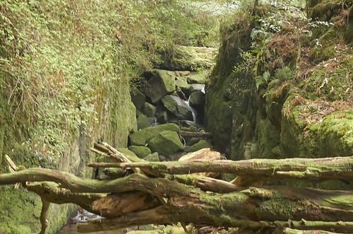 【写真】離島めぐり : 白谷雲水峡2