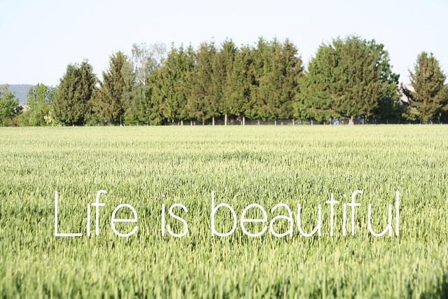 120523 (11)Life