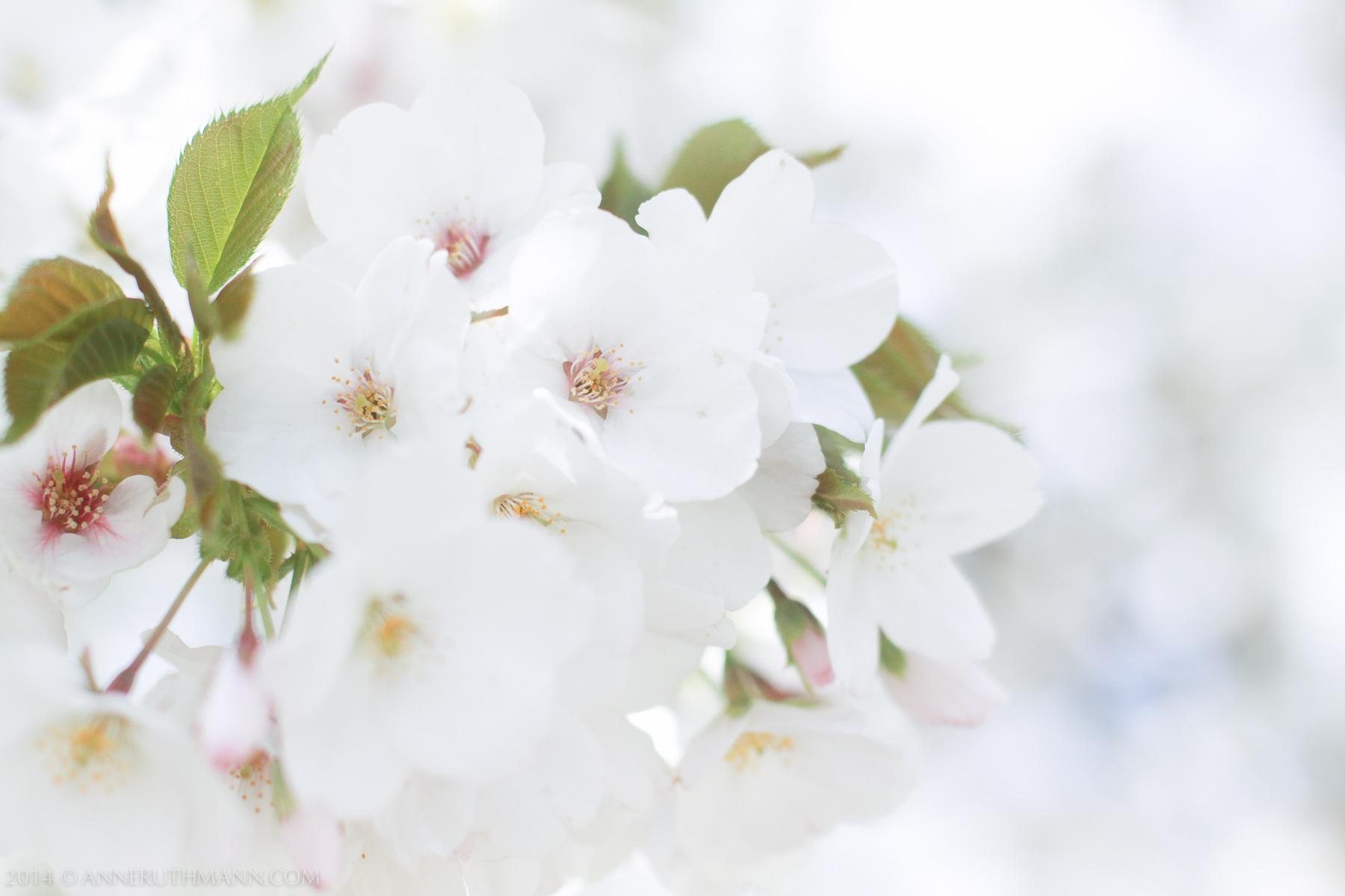 NYC_Spring_2014-8346