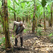 TAO project beneficiary in banana plantation, Uganda, 2009 by Trust for Africa's Orphans
