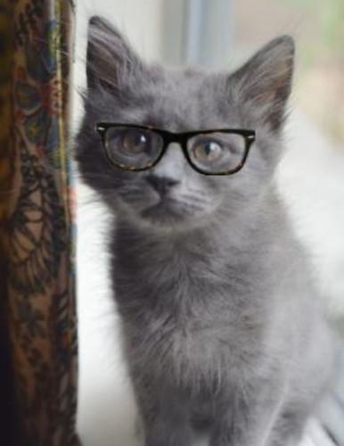 Langston_Glasses_2