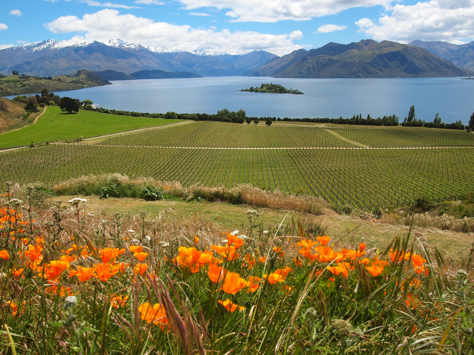 Rippon Vineyard in Wanaka