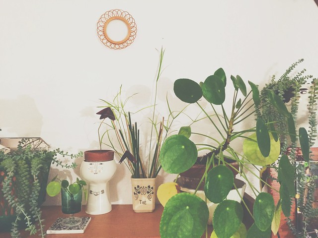 bouturer des plantes