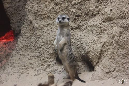 Sonntags Besuch im Zoo Berlin 25.01.2015 50
