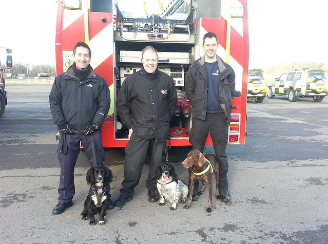Sherlock poses with fire investigation dogs from Hampshire Fire and Rescue and West Midlands Fire and Rescue