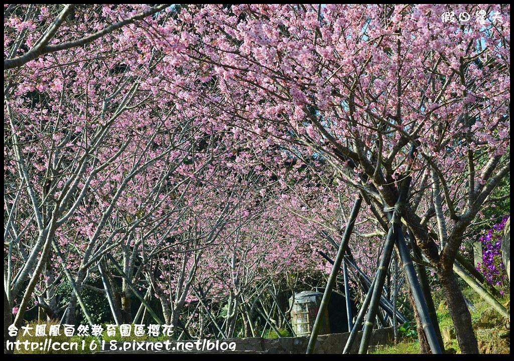 台大鳳凰自然教育園區櫻花DSC_6053