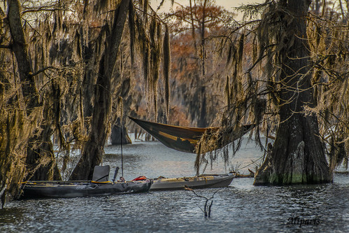 lake nature water kayak fallcolors swamp hammock spanishmoss cypresstrees valentinesday backlighting naturallighting 2015 sigma50500mm lakemartinlouisiana canon7d