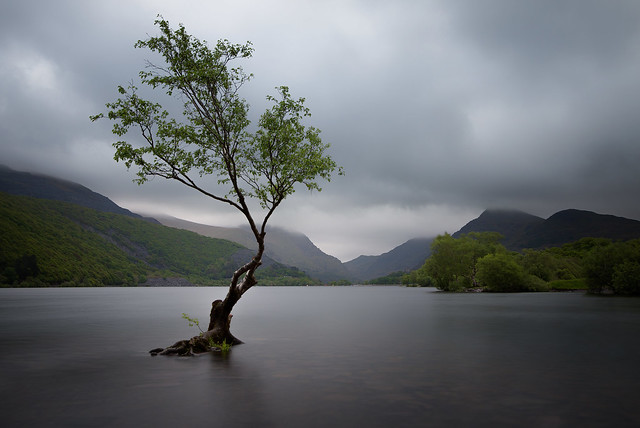 The Welsh lone tree......