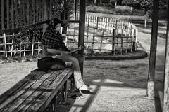 Reader at Park