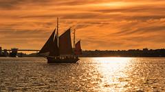 Kiel week 2016 -  Maritime impressions II