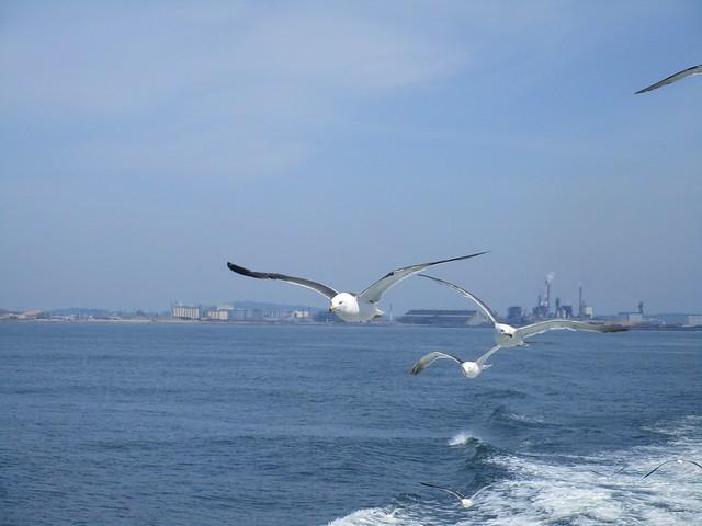 Seagulls, Canon POWERSHOT ELPH 170 IS