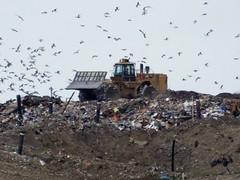 Essex垃圾山過往的光景。(Ken攝)