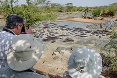 Tanzania-Serengeti-MbuziMaweSafariDrive-50