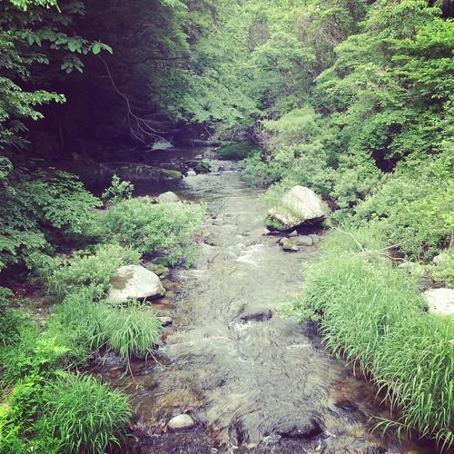 気持ちよさそうな川