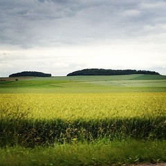 The road from Paris to Brussels. #roadtrip #france #europe #green #fields #trees #tgehillsarealive
