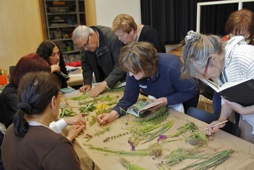 Herbarium en mayo 2013 _ Fundación Cerezales