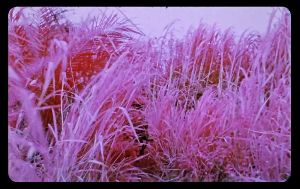 Richard-Mosse-3Richard Mosse: The Impossible Image