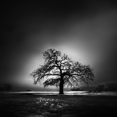 longexposure blackandwhite bw usa tree nature landscape ir photography countryside us photo texas photographer unitedstates image fav50 f14 tx unitedstatesofamerica fineart july fav20 photograph le infrared 100 24mm fav30 lonetree fineartphotography architecturalphotography isgm washingtoncounty commercialphotography fav10 2013 fav40 fav60 architecturephotography fav80 300sec fav70 tse24mmf35l houstonphotographer mabrycampbell july142013 20130714img0287
