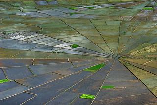Spiderweb Rice Terraces