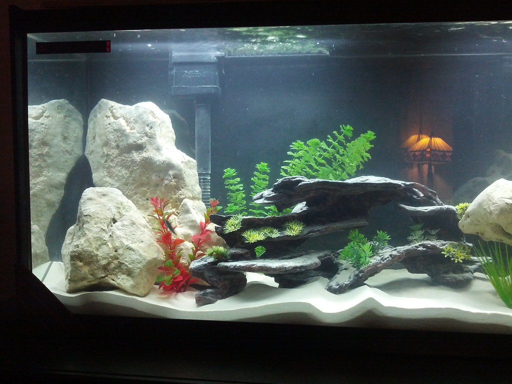 10 gallon fish tank decor fish aquariums 10 gallon for How to decorate fish tank