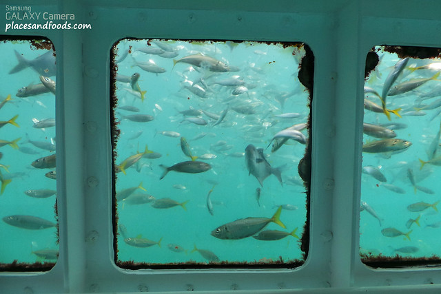 swim with tuna observation deck
