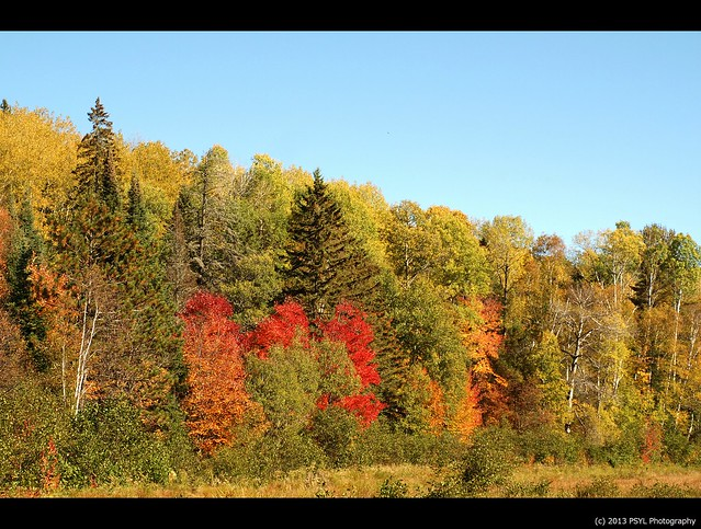 Algonquin Fall Colours