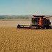 Soybeans at Harvest by UnitedSoybeanBoard