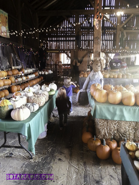 Pumpkin Farm 2013 via sotabulous.com