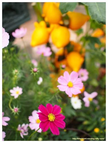 Flowers # 02