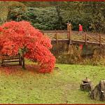 BRYNGARW COUNTRY PARK JAPANESE GARDEN
