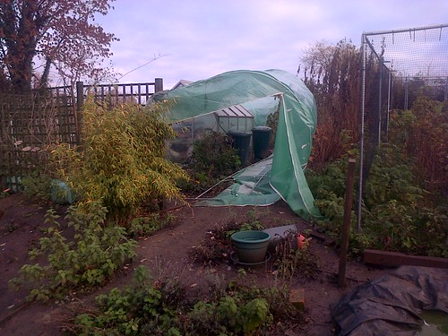 polytunnel Nov 13