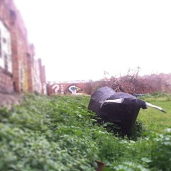 This papier-mache bull appeared overnight in an empty lot near my flat