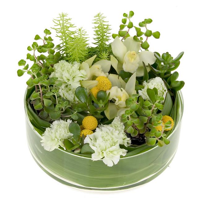 Succulent dish garden leanne and david kesler floral for Succulent dish garden designs