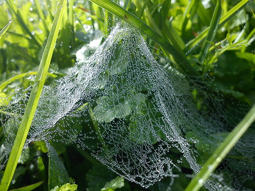 Early Morning Spider's Web