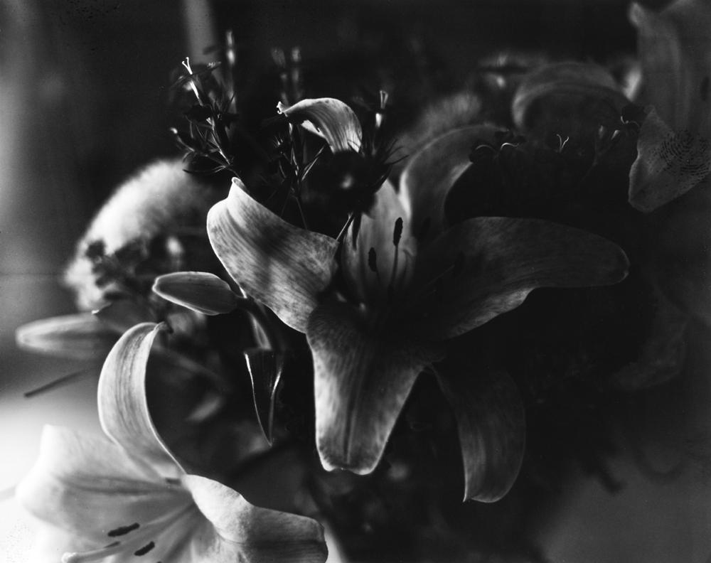 Blossom001a