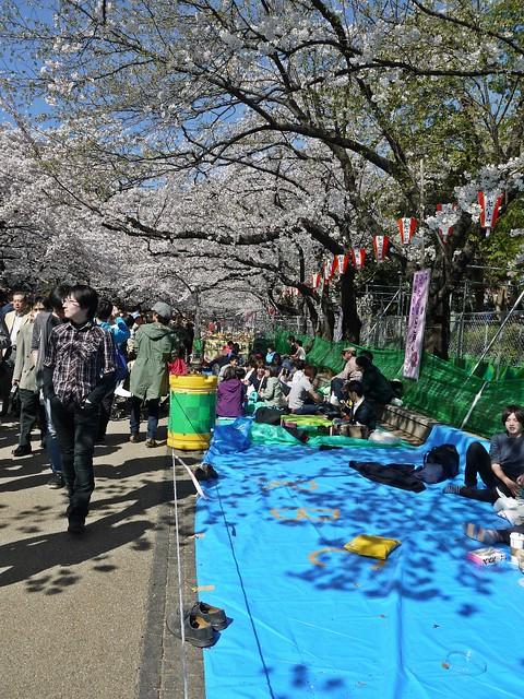 Sakura 2014 - Ueno Park