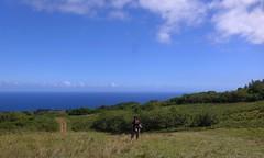 Kona Hawaii Big Island