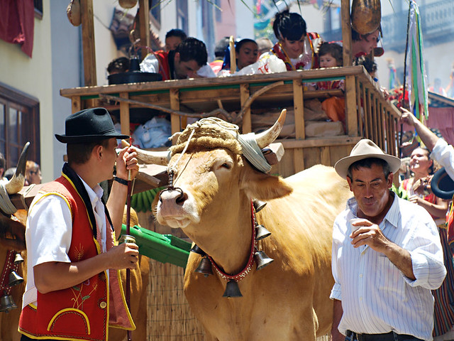 Ox drawn cart, Romeria San Isidro, La Orotava, Tenerife