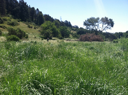 Tall grass on Grass Valley Trail 5-11-14