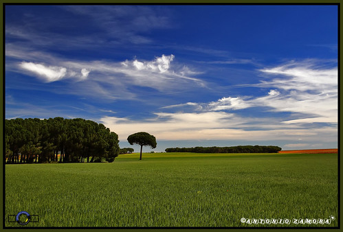 blue trees sky españa cloud paisajes naturaleza color tree verde green primavera colors azul clouds canon landscape arbol eos landscapes spring spain árboles arboles natura paisaje colores cielo nubes 7d árbol llanos nube lamancha llano mancha castillalamancha llanura manchuela casasimarro antoniozamora manchuelaconquense