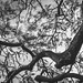 Branches by SamGold Photos