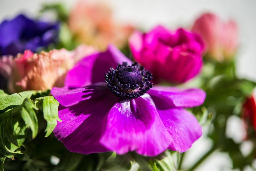 spring_flowers-26