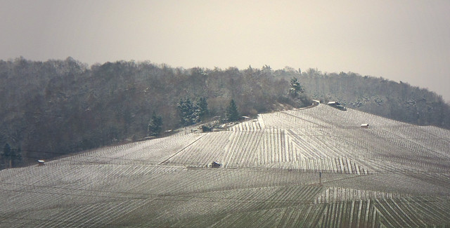 Winter Vineyard - Fellbach, Germany