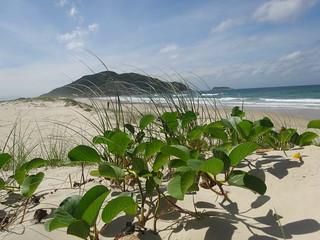 Praia do Santinho Florianopolis