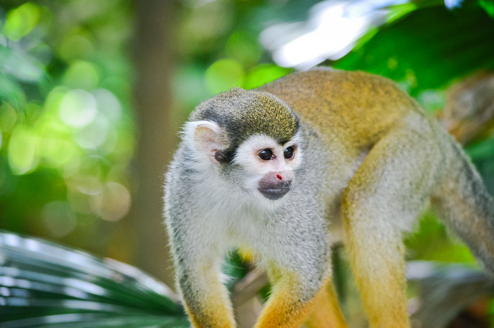 Singapore River Safari Squirrel Monkey